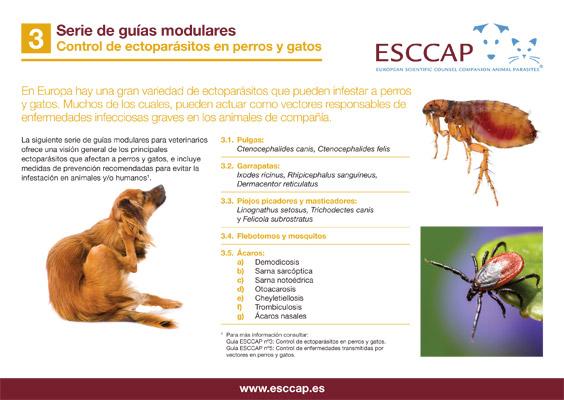 Guía Modular 3